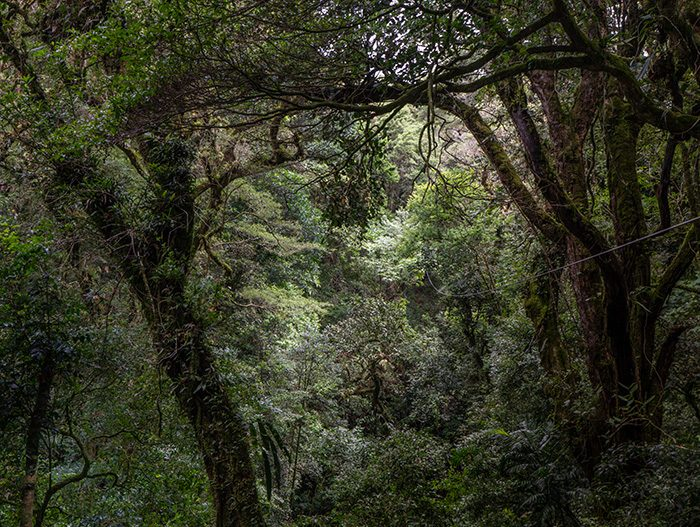 Britt-Coffee-Canopy-Barva-Volcano